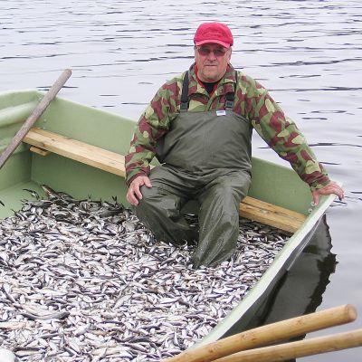 Matti Herd istuu veneessä, jonka pohjalla on runsain määrin pikkukaloja.