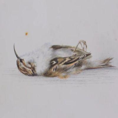 Vesivärimaalaus linnusta