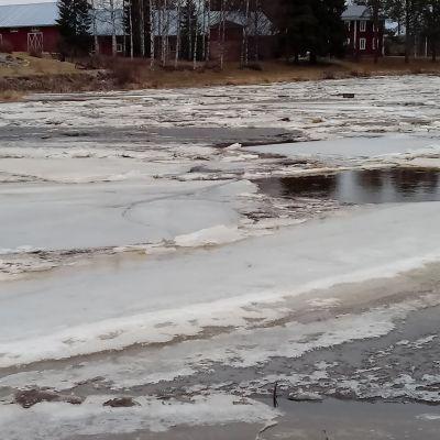 Kyrönjoella jäidenlähtö on ajankohtainen juuri nyt.