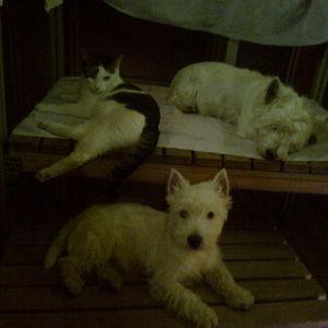Sauna on ihana paikka, kun ulkona sataa kesälläkin räntää. Kiitos saunan lämmittäjille.