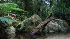 Regnskog i Australien.