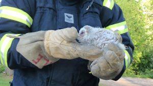 Räddningsverket räddade ugglan