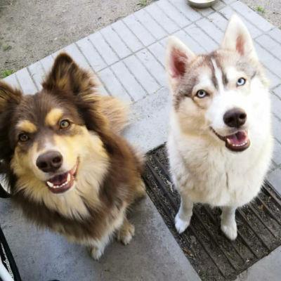 Hundarna Trevor och Mila i Hangö.