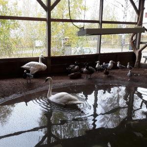 Olika fåglar i och kring en bassäng i fågelhemmet.