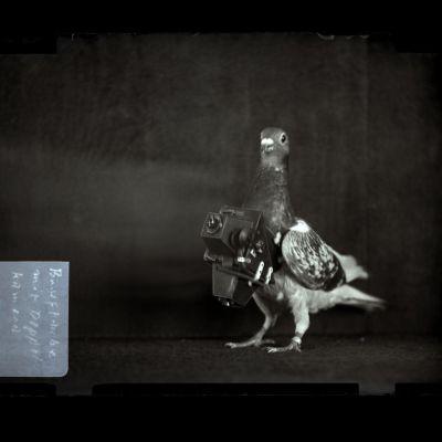 Kyyhkynen kamera kaulassa