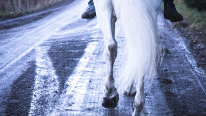 Hevonen ja ratsastaja