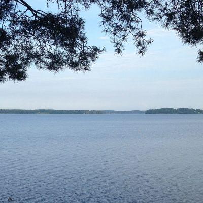 Kuortaneenjärven selkää kesäisenä aamuna.