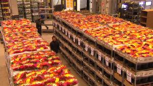 Helsingin kukkatoimitus on Suomen suurin kukkatukku.