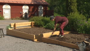 Elin Skagersten-Ström puuhastelee Strömsön puutarhassa
