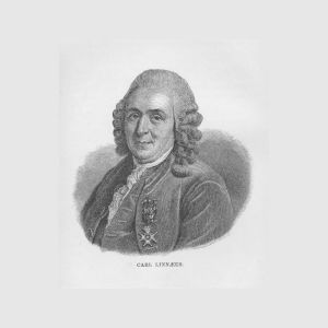 en tecknad bild av carl von linne