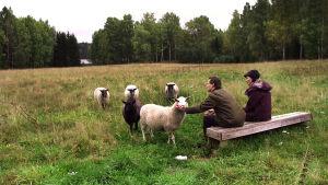 Olli Mustonen vaimonsa Solen kanssa lampaita katsomassa.