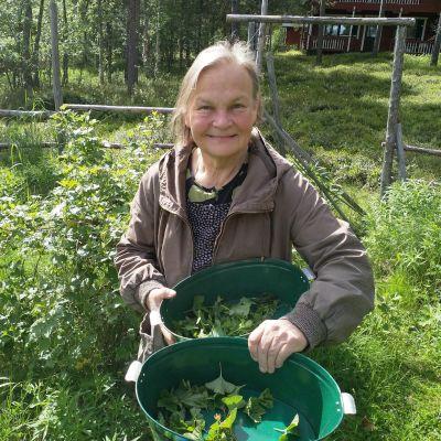 Nellimiläinen Ritva Kytölä kerää joka kesä kasveja teeaineiksi.