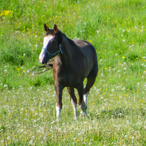 Hästar på ängen