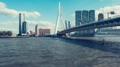 Kuva Rotterdamin sillasta.