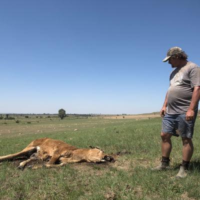 Den sydafrikanska jordbrukaren Chrisjan Putter har förlorat åtta kor under de tre senaste månaderna på grund av torkan