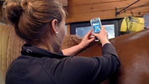 Eläinlääkäri Maija Vesterinen mittaa Myoton-laitteella lämmön vaikutusta hevosten lihaksissa.