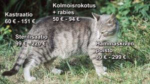 kissan hoitohinnat