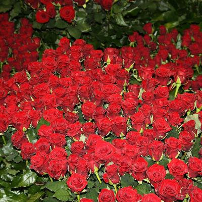 Trädgårdens vår 2010