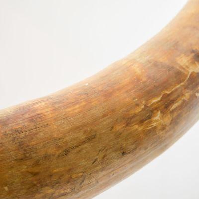 Arktikumissa esillä oleva mammutin syöksyhammas