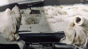 Del av ett av Anja Niemis fotografier som föreställer två kvinnor som sitter i en cabriolet och ser ut över amerikansk öken.