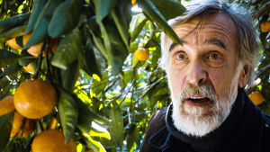 Lembit Ulfsak on Ivo elokuvassa Mandariinit