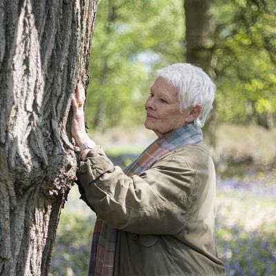 Brittinäyttelijä Judi Dench rakastaa puita. Dokumentissa hän tutustuu puiden elämään ja vuodenkiertoon.