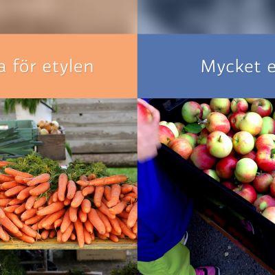 Frukt och grönsaker med mycket etylen resp känsliga för etylen