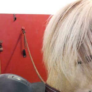 Liten pojke lutar näsan mot en hästmule