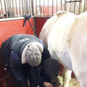litet barn rensar hästhov tillsammans med handledare