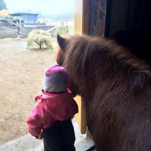litet barn som står tätt intill shetlandsponny tittar ut genom stalldörr