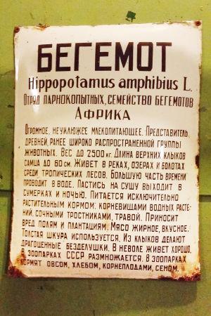 Virtahevon esittelykyltti Leningradin eläintarhan piiritysmuseossa