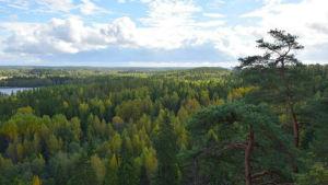 Vacker vy över skog.