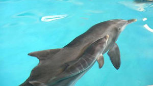 delfin i bassäng