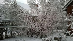 Snölandskap.
