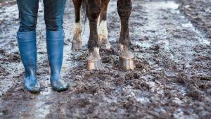 tyttö ja hevonen seisovat kurassa