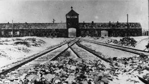 Infarten till Auschwitz 1945 efter befrielsen.