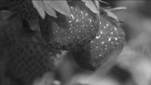 Svartvita jordgubbar
