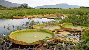 Avara luonto: Kukoistavat ekosysteemit, yle tv1
