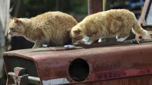 prisma: kissojen salattu elämä, yle tv1