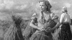 Tyttö sitoo lyhdettä pellolla