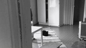 kissa makaa tuvan lattialla