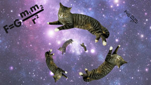 Katter i rymden