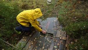 Dora Siivonen tar vatten ur brunnen, 2013