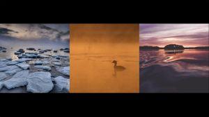 Veden virtaa Uuden luontokuvan galleriassa