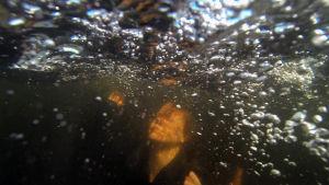 Johanna Dikert låtsas att drunknar, skärmdump