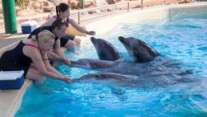 Delfinerna leker i den nya bassängen i Grekland