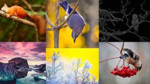 Luontovuoden #uusiluontokuva -haasteen viikon kuvat