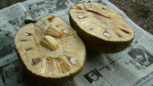 En halverad jackfrukt