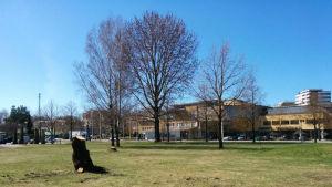 Vy mot stadshuset i Pargas från Centralparken en solig dag i maj.