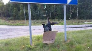 En skarv är upphängd i ett trafikmärke i Malax.